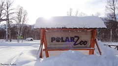 Z is for Zoo (darrenboyj) Tags: winter vacation white holiday snow norway zoo europe sunflare polarzoo