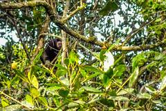 """O primeiro contato com primatas. Muito escondido. • <a style=""""font-size:0.8em;"""" href=""""http://www.flickr.com/photos/39546249@N07/9705790174/"""" target=""""_blank"""">View on Flickr</a>"""