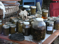 lots of herbal medicines (henna lion) Tags: autumn wild fall diy ic community herbs joan trust land medicine homestead oils herbal medicinal sustainable fic primitive intentional infusions shagbark crafted tinctures 2013 kovatch joankovatch