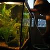 288/365 fish keeping (werewegian) Tags: pet water aquarium bucket tube cleaning change day288 oct13 fishkeeping werewegian day288365 3652013 365the2013edition 15oct13