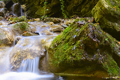 harmony of water (lucascalmati) Tags: light lake flower fern green mushroom water fountain garden landscape lago shower wate