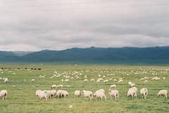[ 我的爱就像一片云 在你的天空无处停 ] (little bunny。) Tags: 风景 旅行 摄影 色彩 胶片