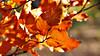 Las hojas (Jesus_l) Tags: españa europa segovia otoño lagranjadesanildefonso jesusl sanindefonso