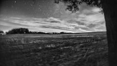 camminando a piedi nudi nel campo una notte d'estate ... (UBU ♛) Tags: blancoynegro blackwhite noiretblanc blues biancoenero 30sec blunotte blupolvere ©ubu blutristezza unamusicaintesta landscapeinblues bluubu luciombreepiccolicristalli