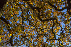 Little Acorns (Glyn Owen Photography & Image-Art) Tags: sky leaves leaf cheshire branches bark limbs tones autimn helsby