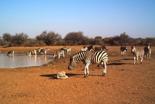 Namibia Safari - Lake Lodge 23