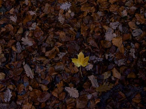 Last autumn traces ©  Still ePsiLoN