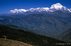 Along the trail near Tadapani, Dhaulagiri I behind, 1988 (NettyA) Tags: travel nepal film trekking asia hiking 1988 slide fujifilm pokhara scannedslide 35mmslidefilm kaski westernregion ghodepani dhaulagirii harryhiking neartadapani
