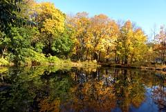 Autumn in the Bronx (Eddie C3) Tags: newyorkcity autumn bronx vancortlandtlake autumncolor nycparks vancortlandtpark