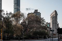 New York (Edi Bhler) Tags: newyorkcity plant newyork building tree facade pflanze structure highrise bauwerk baum gebude fassade hochhaus vereinigtestaaten 2470mmf28 nikond800 flatironbuildingnewyorklm