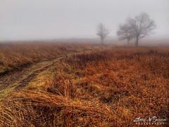 fog virginia bigmeadows shenandoahnationalpark... (Photo: Larry W Brown on Flickr)