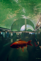 (mynameischrisgerard) Tags: fish aquarium exposure fuji tank detroit belle multiple isle x100s