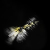 Theory Of Chaos - Butterfly Effect (andreas.klodt) Tags: portrait abstract art nature animal butterfly chaos kunst natur explore greatshot 100 fav lowkey effect tier schmetterling abstrakt bestshot animalportrait klodt theoryofchaos tierportrait schmetterlingseffekt chaostheorie andreasklodt