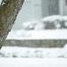 Snowing Connecticut