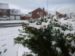 Icing Sugar or Snow? (Katie_Russell) Tags: ireland winter snow cold ice snowy northernireland snowing ni ulster nireland wintery coleraine countylondonderry countyderry coderry colondonderry colderry countylderry