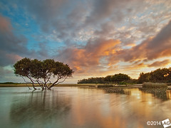 A l o n e T o g e t h e r (AnthonyGinmanPhotography) Tags: sunrise reflections mangrove lonetree bonnievale theshire rnp theroyalnationalpark