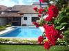 Bico-de-papagaio dobrado. (José Argemiro) Tags: poinsettia flor bicodepapagaio florvermelha flordenatal rabodearara florcardeal manhãdepáscoa