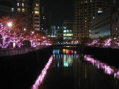 3879 Sakura Light-up (mari-ten) Tags: bridge autumn building tree fall nature japan river lights tokyo nightshot illumination 日本 shinagawa 東京 紅葉 秋 kanto osaki eastasia 東京都 大崎 2011 品川区 ライトアップ 関東地方 201111 20111126
