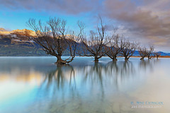 W I L L O W  |  T R E E S (Benz Catbagan) Tags: autumn trees newzealand sky mist snow mountains water fog clouds sunrise canon ngc willow queenstown glenorchy