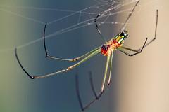 20140522-IMG_0105 (kellyv) Tags: desktop nature animals arachnids canon7d canonef100f28lis
