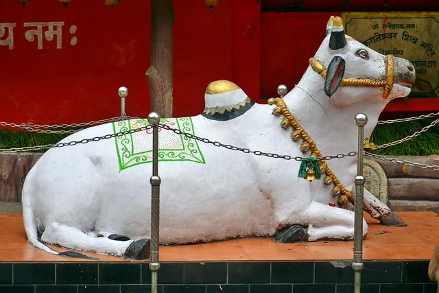India - Sikkim - Legship - Shiv Mandir Hindu Temple - Nandi - 24