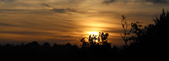 Riddlesdown Sunset 3 (Chris Sinfield) Tags: colours skies sun sunset riddlesdown uk visituk visitsurrey surrey hills trees downs england countryside travel sky clouds tree plant plants landscape glowing inspiration beauty natural foliage flickr photography canon canon700d europe dusk cloud