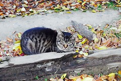 Today's Cat@2016-11-13 (masatsu) Tags: cat thebiggestgroupwithonlycats catspotting pentax mx1