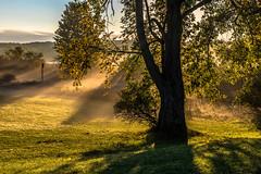 Tree in the mist... (pa_cosgrove) Tags: landscape mist tree park 5dm4 grass leaves lawn sunbeams