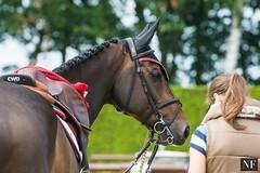 LGCT Valkenswaard 2016 (yasminabelloargibay) Tags: horse hest horserider hipismo hipica horseshow cheval cavalo caballo cavalier cavallo equestrian equine equestrianism equitacion showjumping showjumper pferd paard valkenswaard netherlands holanda nikon nikond7100 globalchampionstour longinesglobalchampionstour lgct gct gcl