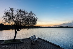 22102016-PBP_6008 (Berns Patrick) Tags: pins landes lac azur foret soleil matin ponton pigne