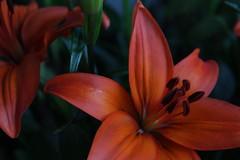 primer plano (luisriquelmerogel) Tags: enfoque selectivo flor