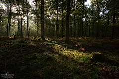 Break through (Arron Roberts Photography) Tags: forest light sunrise trees nature woodland warmth