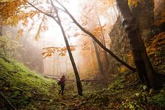 Lazarev kanjon (Djordje Petrovic) Tags: serbia srbija nature kanjon canyon autumn tokina1224mm tokinalens tokina color photo light fog foggy forest tree