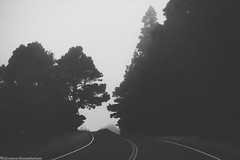 IMG_7518 (Welcome to the Sanitarium) Tags: black white bw monochrome fog foggy forest california nature travel trees highway1 road