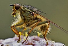 Urtier (heiko.moser (+ 9.800.000 views )) Tags: insekt insect insetto tier tiere animal animale fauna farbig canon color closeup makro macro outdoor entdecken discover natur nature natura nahaufnahme heikomoser