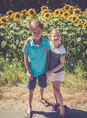 _DSC0735 (David Soanes Photography) Tags: dordogne nikon d3 28 france summer holiday martha ethan sunflowers