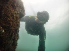 GOPR5955 (ambrogi_taubate) Tags: naturezaselvagem marinha mergulhando ubatuba sp brasil naturezamarinha fantstica apneia 10m setembro primavera 2016
