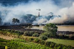 Incendio platamona (4) (Autolavaggiobatman) Tags: canadair incendio platamona pineta elicottero stagno fiamme fumo mare sardegna