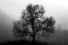 Tree in November mist (frode.vermedal) Tags: silhouette tree bw blackandwhite november mist fog cold nice
