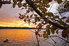 Autumn (Tiara Rae Photography) Tags: autumn transition leaves holes decay color change sunset clouds lake reflections orange