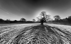 Life Is But A Walking Shadow - Syon Park London by Simon & His Camera (Simon & His Camera) Tags: tree shade shadow distorted horizon simonandhiscamera sky skyline syonhousepark syon syonpark syonhouse sunlight monochrome morning blackandwhite abstract autumn frost brentford contrast grass isleworth london light landscape middlesex nature outdoor sun silhouette woods winter field serene sunrise
