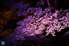 Tohoku 2016 - 513 (西文 Simon) Tags: 日本東北 miyagigun miyagiken 日本