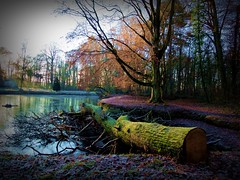 2016-12-04 wood , pond and light (56) (april-mo) Tags: wood pond light winter nord france villerscampeau reflection