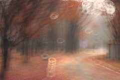 Working in the Park (lizartpic) Tags: autumn fall forest nature tree park bokeh heart illusion tilting longexposure road light smooth slowshutter people nothing naturallight