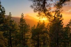 Golden Teide (martin.matte) Tags: teide tenerife teneriffa spain islascanarias canaryislands mountain sunset goldenhour goldenlight colourful trees nature
