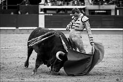 Juan-Bautista (Manon71) Tags: 8demayode2016 juanbautista sanisidro2016 bullfight bulls espaa lasventas madrid spain tauromachie tauromaquia toreros toros espaa