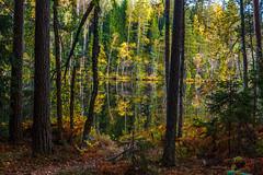 (PaiviSvanback) Tags: ruska syksy autumn luukki suomi finland