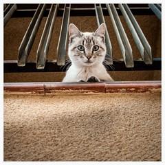 (yolanda_perez96) Tags: 2016beceiteteruel gatitos felinos mamifero airelibre