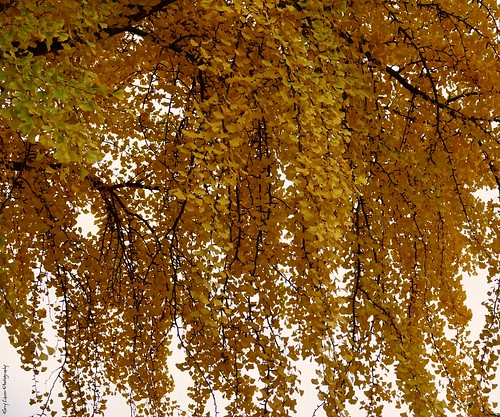 """""""waterfall"""" of leaves • <a style=""""font-size:0.8em;"""" href=""""http://www.flickr.com/photos/52364684@N03/31004306476/"""" target=""""_blank"""">View on Flickr</a>"""