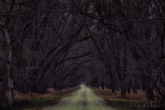 Tree Lined Road (Jonathan Tasler) Tags: tree road gravel dirtroad trees forest spooky scary